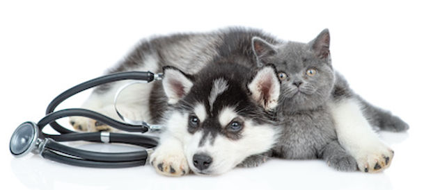 Kitten puppy medical.jpg