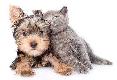 Cute kitten leaning on puppy.jpg