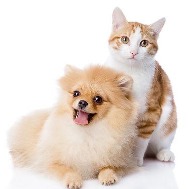 Pom and cat 72 dpi.jpg