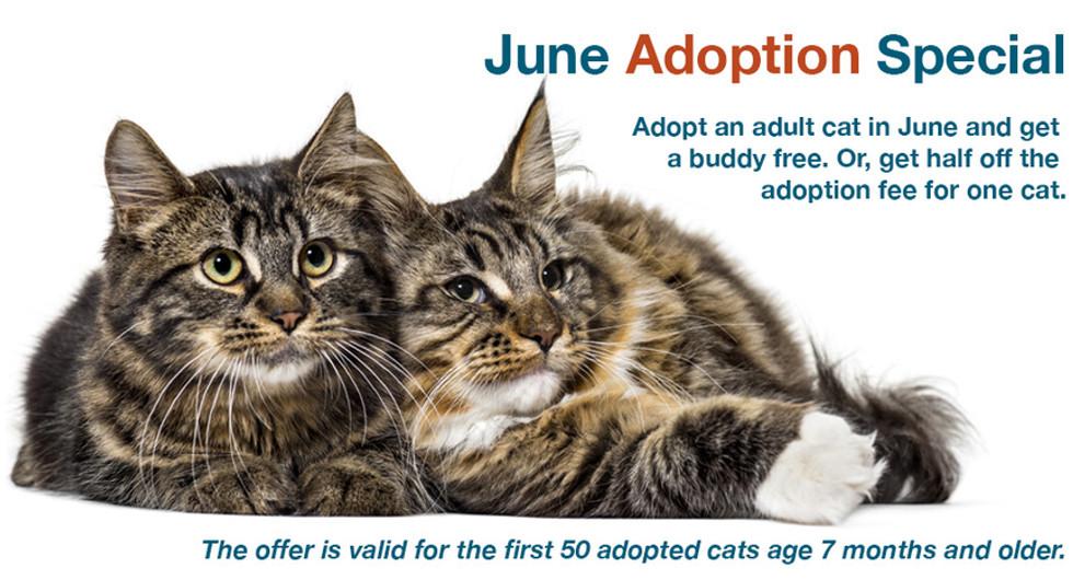 June adoption special