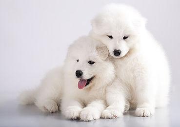 Puppy white floof resized.jpg