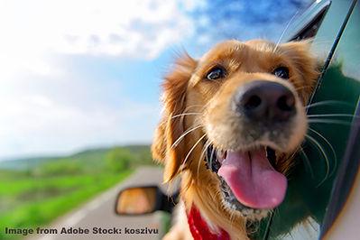Happy dog in car.jpg
