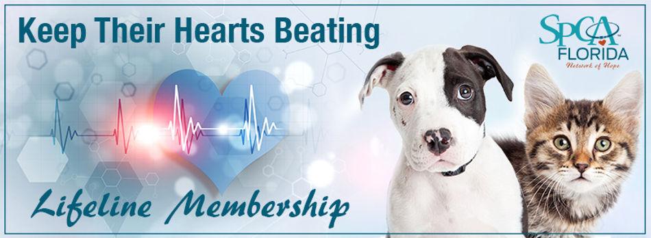 puppy kitten heartbeat banner lores.jpg