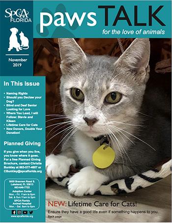 SPCA Florida Newsletter November 2019