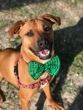 Dogs at SPCA Florida