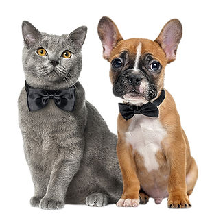 Cat and dog in bow-ties 450 wide 72 dpi.jpg
