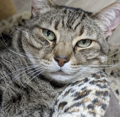 Arnie - long-term resident at SPCA Florida