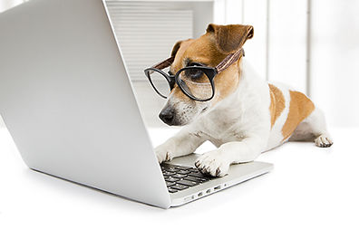 Dog with computer