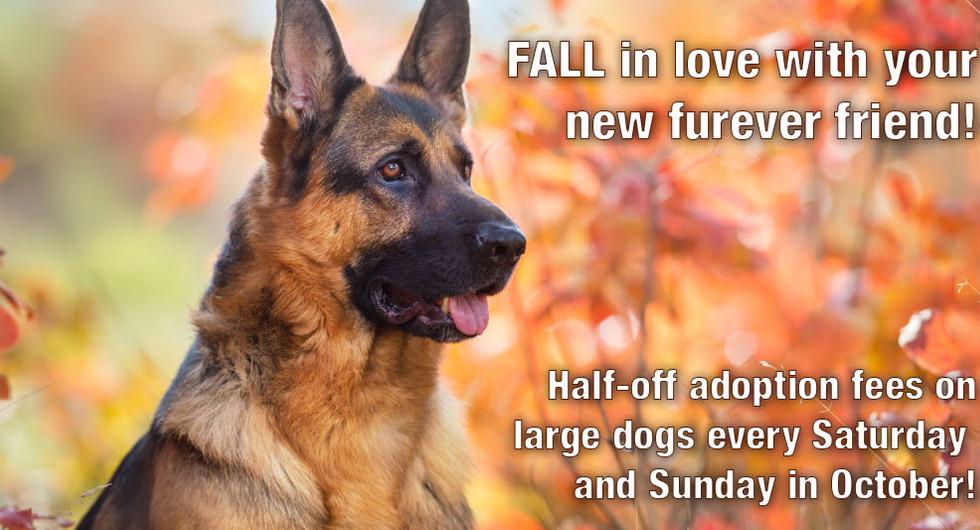 October 2021 large dog adoption special LORES.jpg