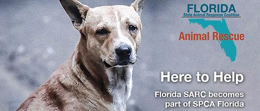 Part of SPCA Florida_650.jpg