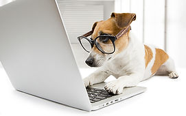 Dog at work.jpg