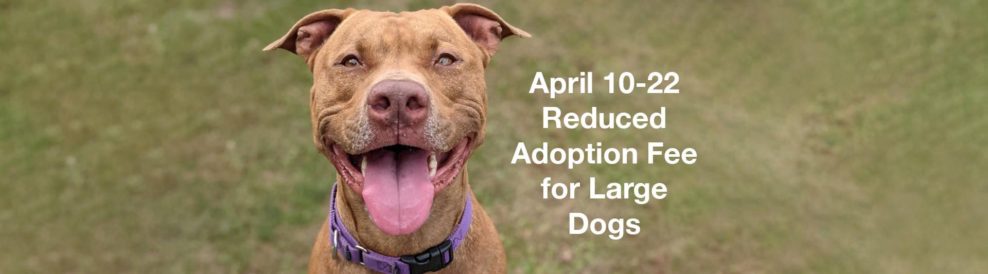 Adoption Event April 10 to 22