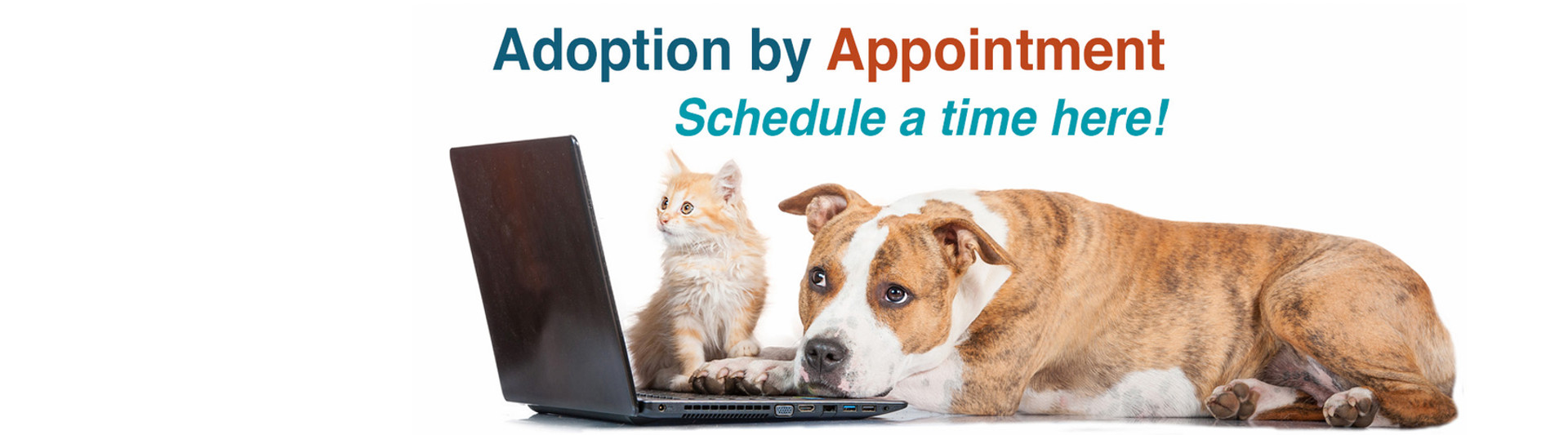 Adoption by Appointment
