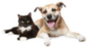 Cat and dog.jpg
