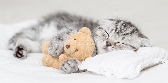Adorable Kitten.jpg