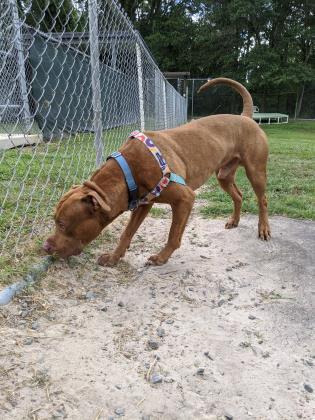 King, adoptable dog at SPCA Florida