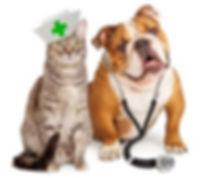 Vet cat and dog.jpg