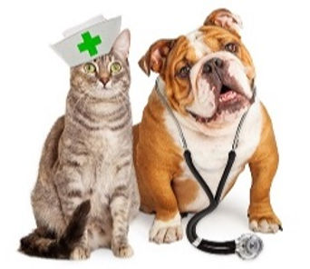 Vet cat and dog.jpg