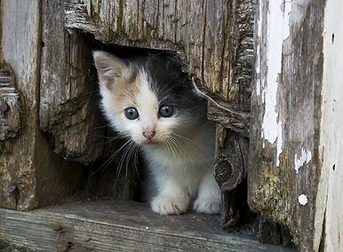 Kitten peeking out 550 wide.jpg