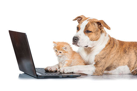 Dog and kitten by computer.jpg