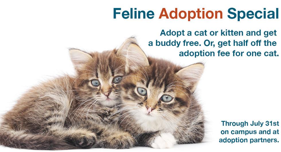 Feline adoption special