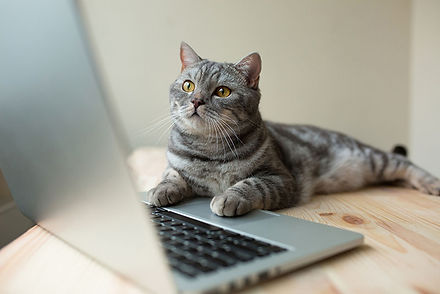 Cat using computer.jpg
