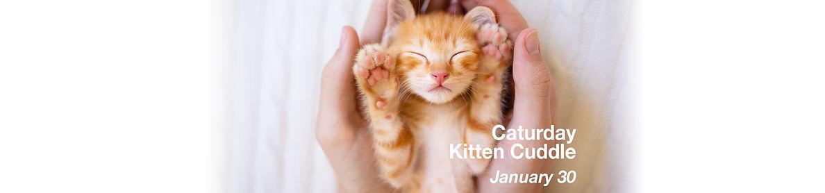 Kitten Cuddle Event copy.jpg