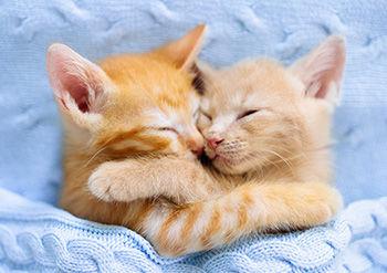 Cuddling kittens.jpg