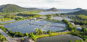 Aquaculture_edited.jpg