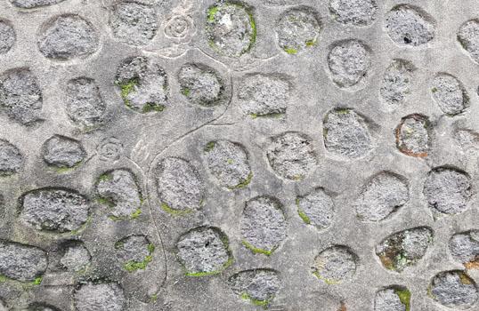 시멘트 위에 그리는 꽃