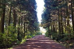 사려니숲 길