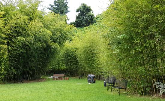 대나무 정원