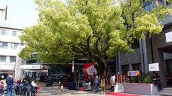 역사를 기억하는 녹나무