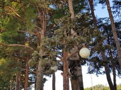 나무 시뮬라크르