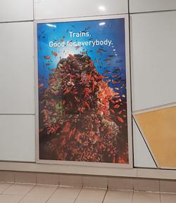 산호초와 기차