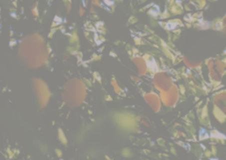 mirabelle%20light_edited.jpg