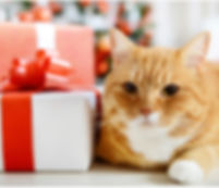 Cat and present.jpg