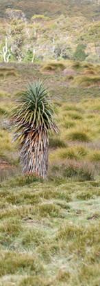 Landscape with wombat