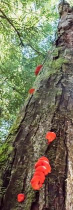 Fungi feasting