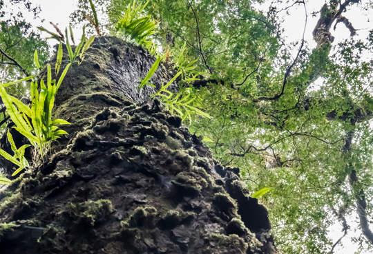 Trunks of fern