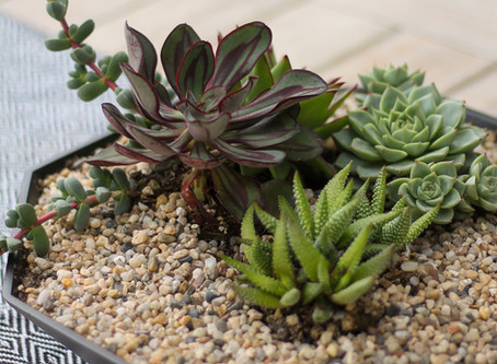 How to Create a Succulent Bowl