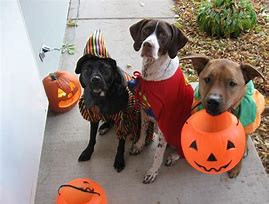 Happy HOWL-O-WEEN!