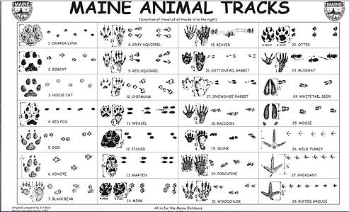 Maine Animal Tracks.png