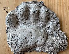 Bear cast.jpg