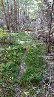 The Old Witt Cart Road.jpg