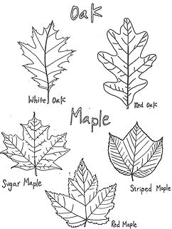 Leaf shapes-1.jpg