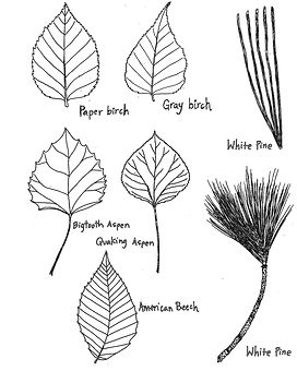 Leaf shapes-2.jpg