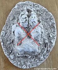 0a-coyote print cast--direct registratio