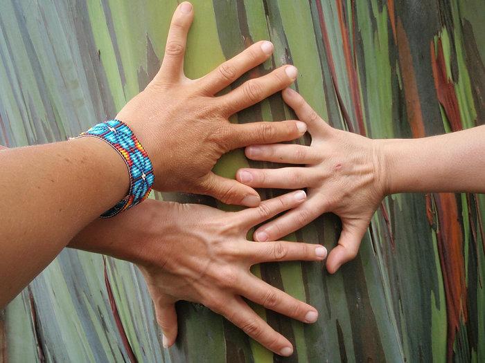 Eucalyptus Love.jpg