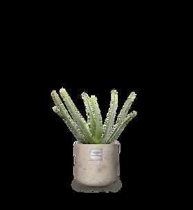 Pflanzen_kombiniert_anthony.png